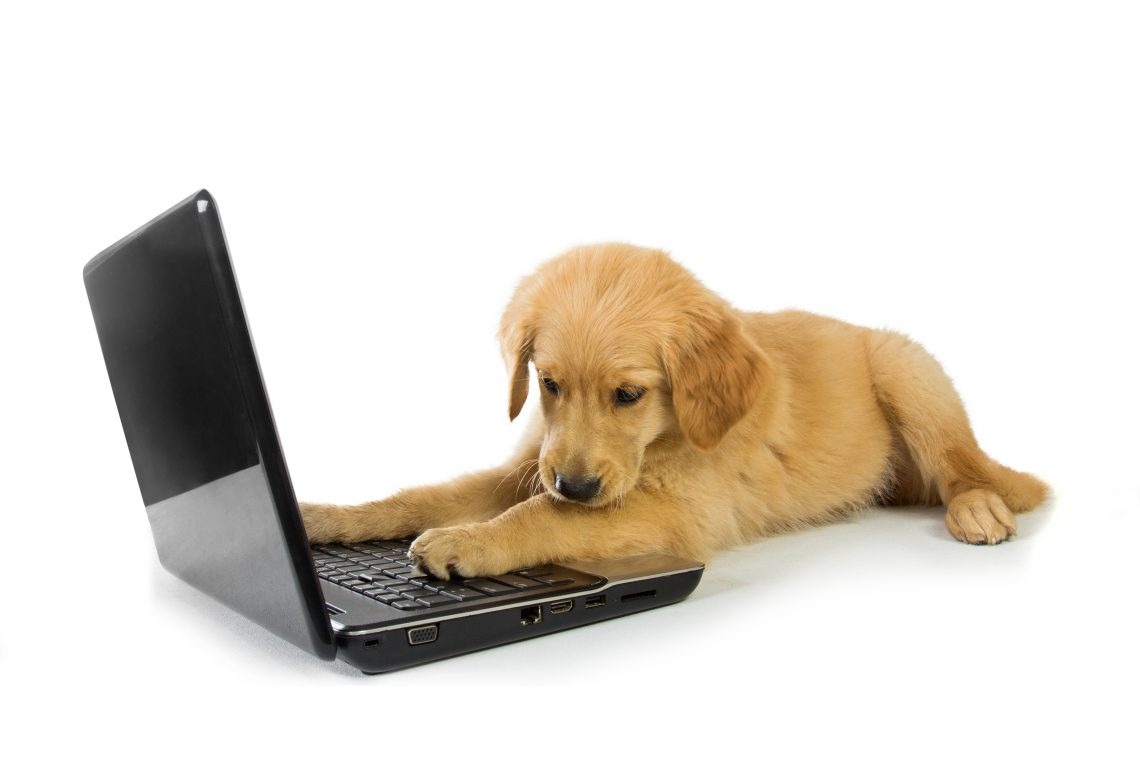 cropped-puppy-laptop1.jpg